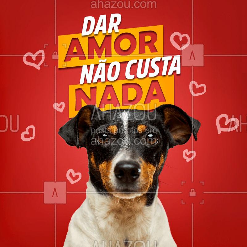 Todo animal merece um lar quentinho e cheia de amor, não perca tempo Adote. #adote #adotepets #AhazouPet #cats #petlovers #dogs