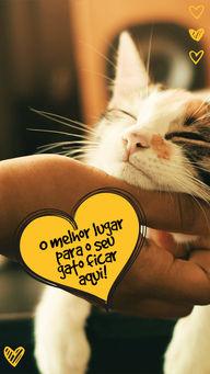 Cat sitter é aqui! Você pode confiar que seu gatinho será muito bem cuidado! #AhazouPet #petsitter #hotelzinho #gato #catsitter