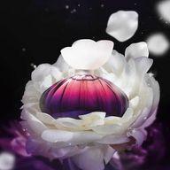 O perfume Floralle é uma fragrância criada para mulheres intensas, poderosas, que sempre deixam um ar de mistério por onde passam. Um Deo Parfum floral marcante e impactante que combina notas florais com notas orientais mais intensas.  #AbelhaRainha #Lançamentos #Perfumaria #Perfume #Parfum #Woman #ahazouabelharainha #ahazourevenda